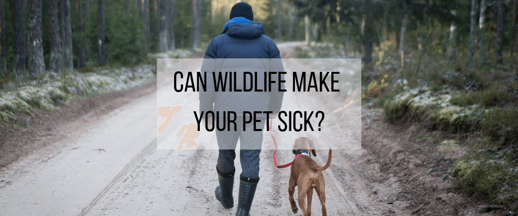 Can Wildlife Make Your Pet Sick?