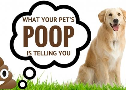 pet poop